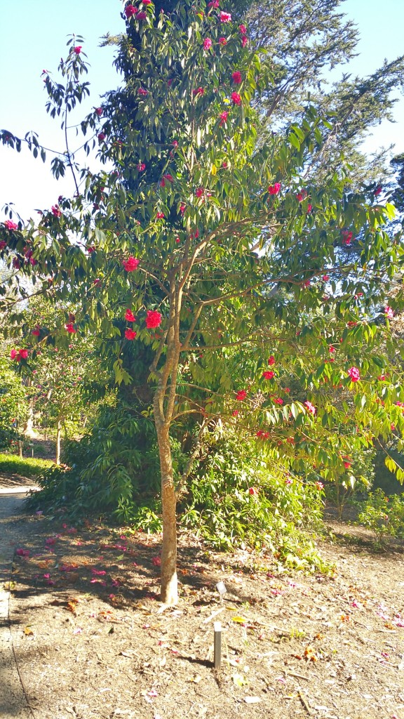 San Francisco Botanical Garden Ootd Morgan Etoile